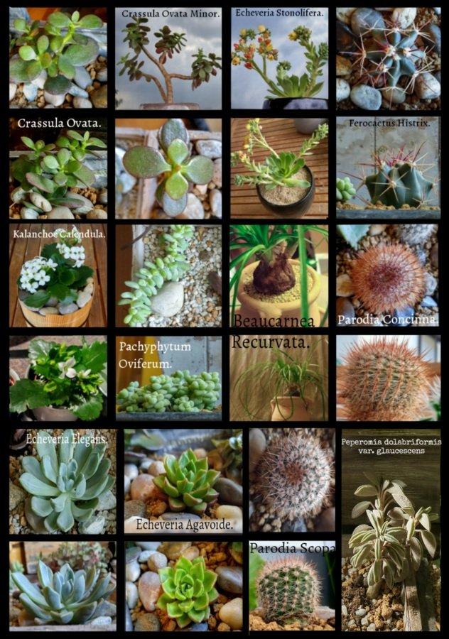Identification Cactus et succulentes.