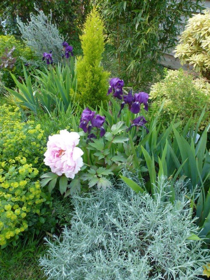 Iris et pivoines