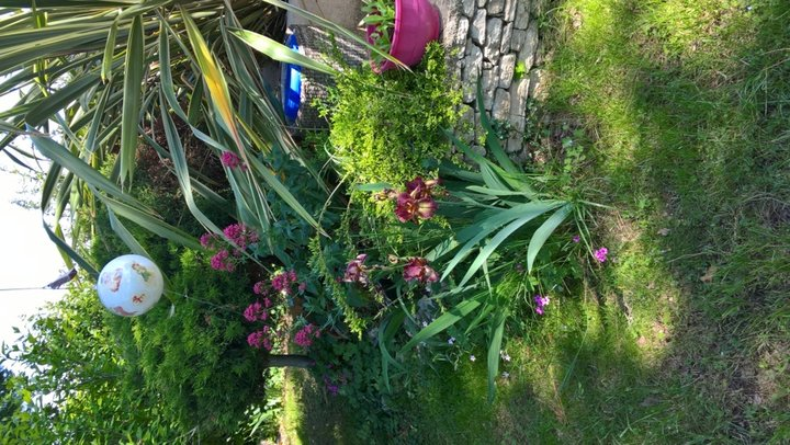Iris maron -rouge
