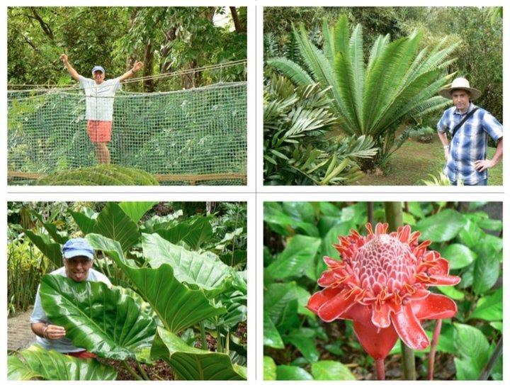 Jardin de Balata Martinique.