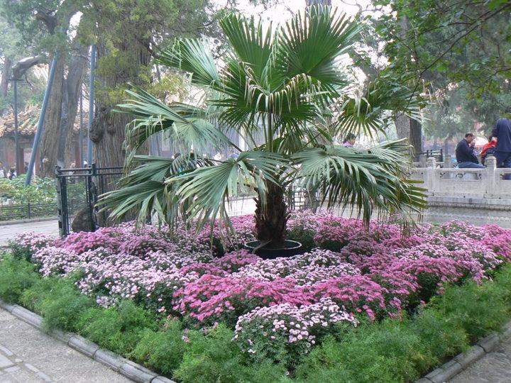 Jardin interieur de la cité