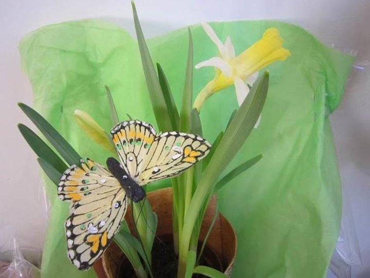 Jonquille et papillon