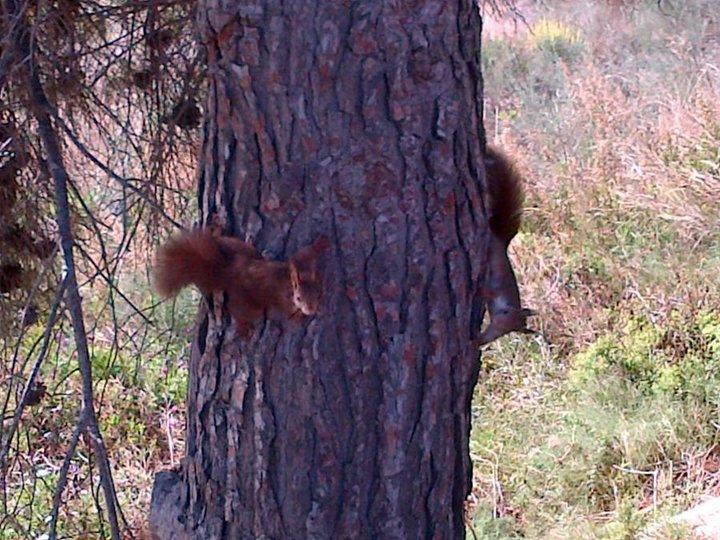 L'ecureuil a trouvé son copain !!