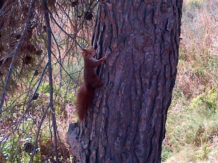 L'ecureuil qui cherche son copain