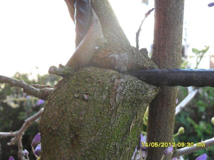 La force des branches