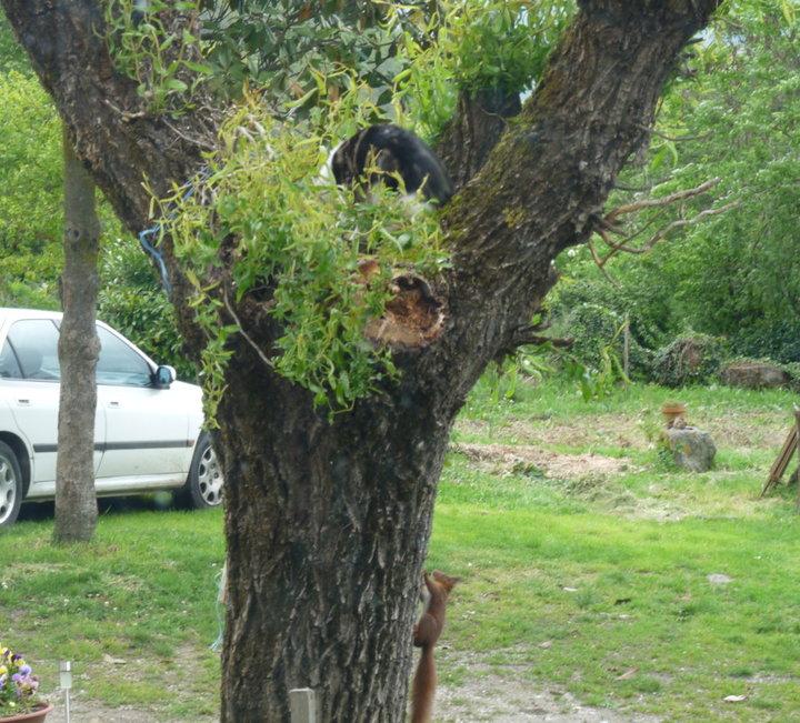 Le chat et l'écureuil