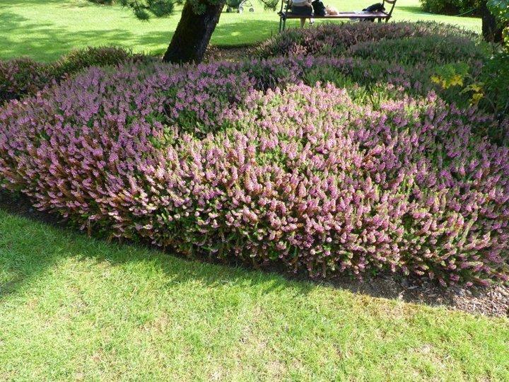 Le jardin D'Apremont sur l'Allier 18150