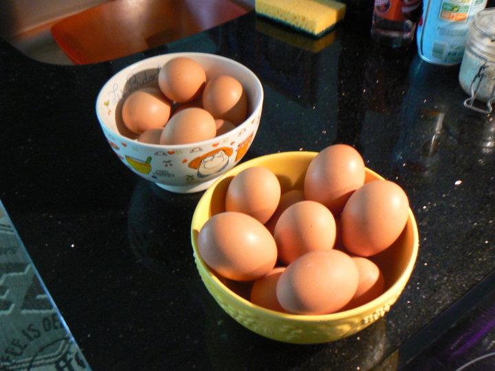 Les bons oeufs de mes poules.