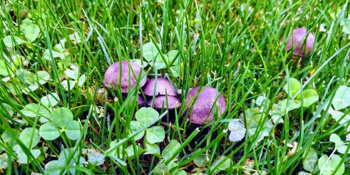 Les champignons par temps pluvieux