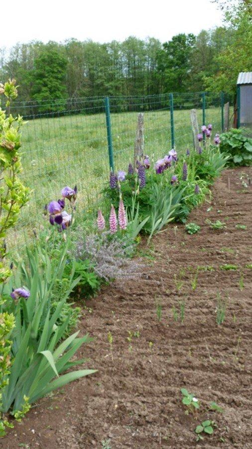 Les fleurs pour les abeilles