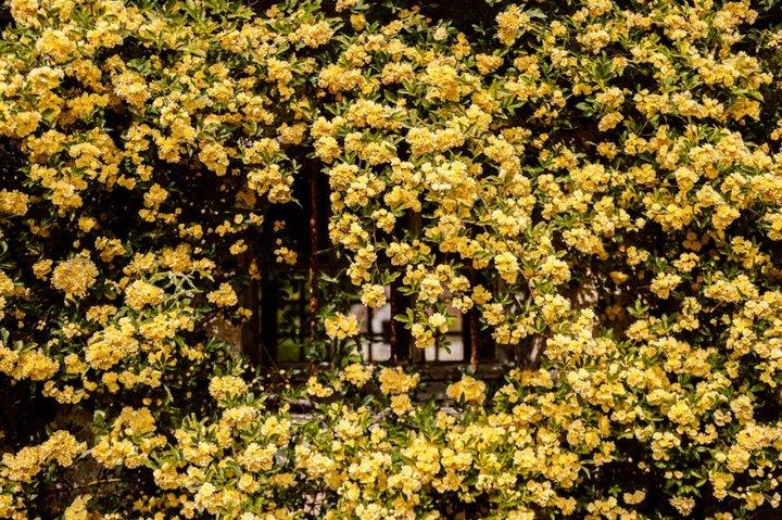 Les floraisons