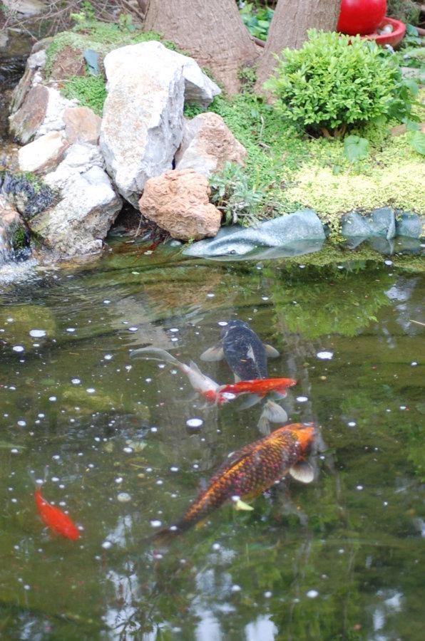 Les poissons du bassin