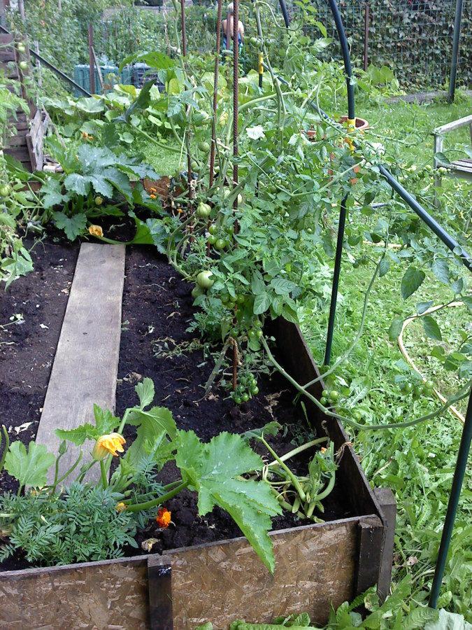 Les tomates , cerise et coeur de boeuf