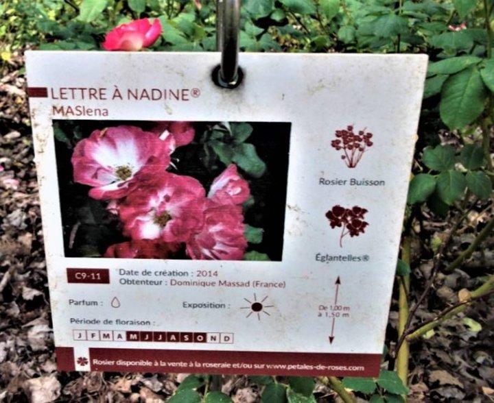 lettre à Nadine