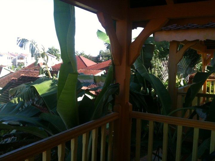 Ma chambre dans les bananiers