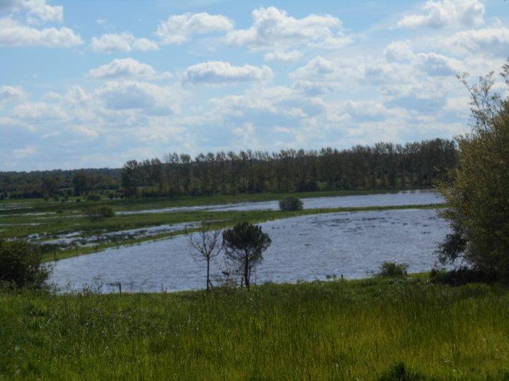 Marais inondés