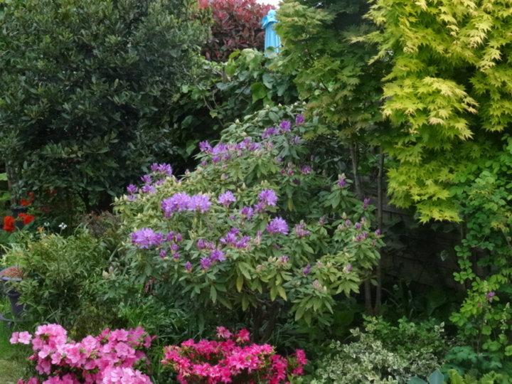 Massif de plantes d'ombre
