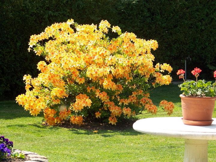 Massif et fleurs d'agrément