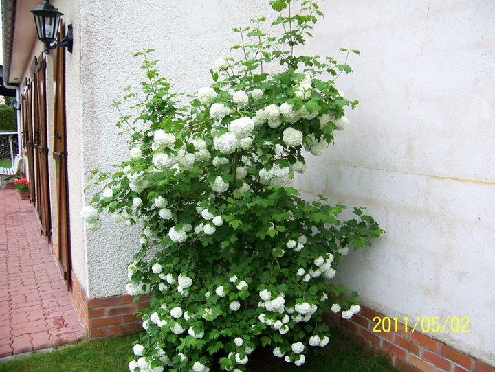 Massif et fleurs d'agrement