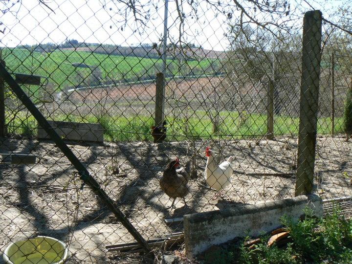 Mes poulettes.