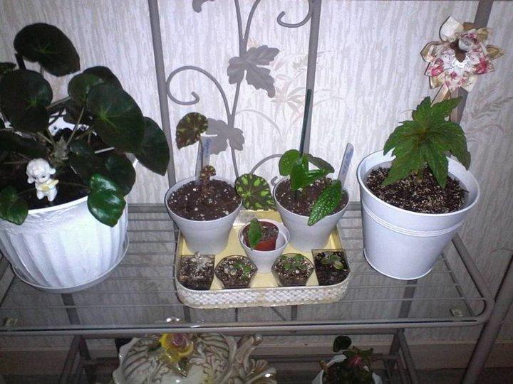 Mon coin plantes vertes