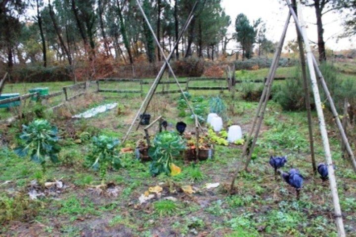 Mon jardin  l'hiver