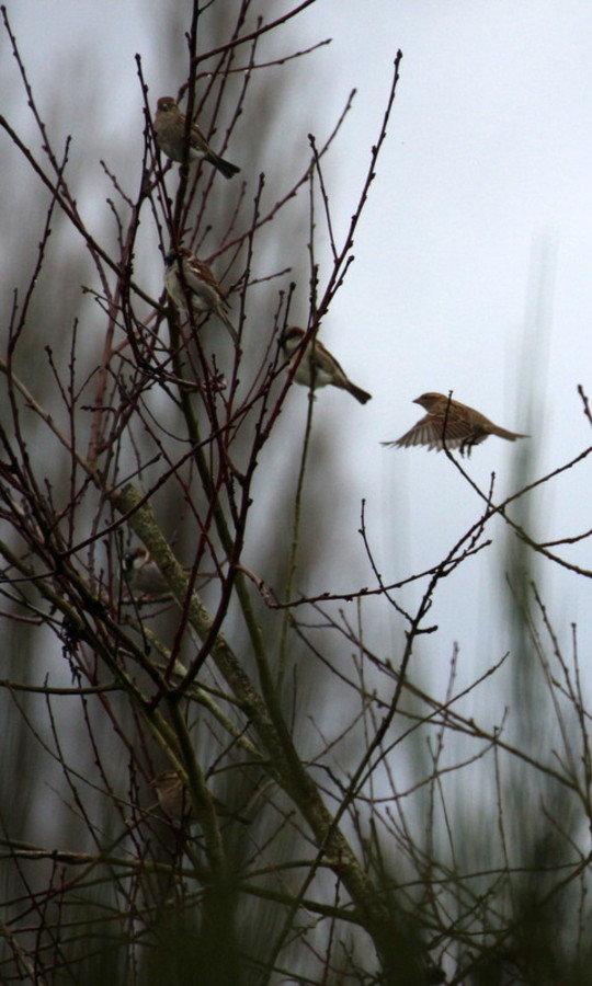 Oiseaux commun