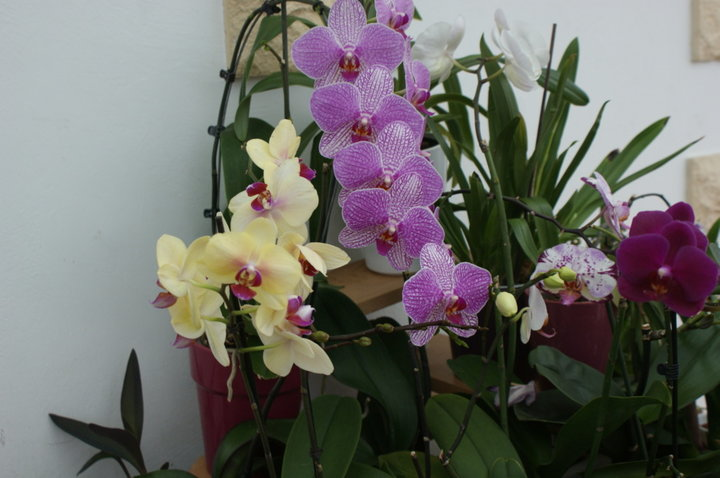 Orchidées encore