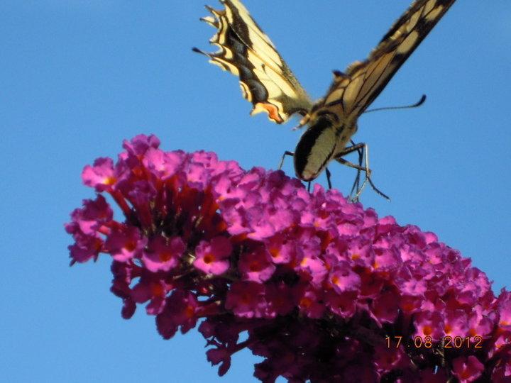 Papillon inconnu