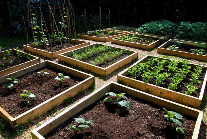 Petit jardin carres