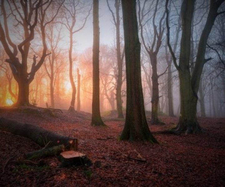 Petit matin en forêt
