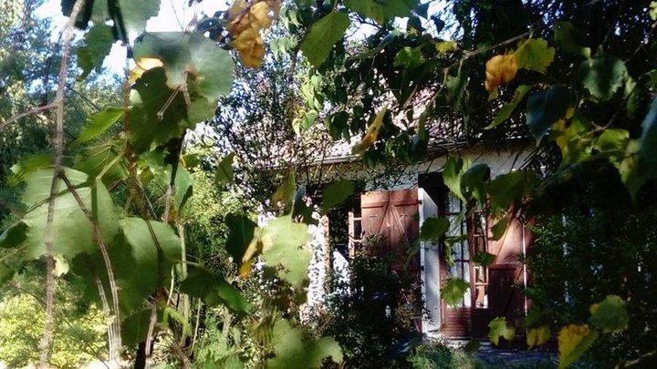 Petite maison derrière le feuillage