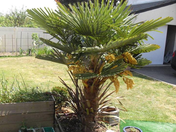 Photo du palmier