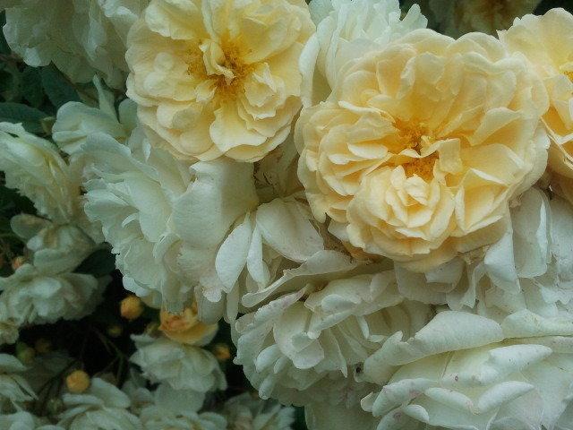 Pleines fleurs