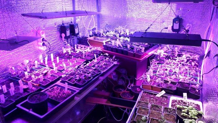 Poivrons,tomates,et le reste commence a pousser concombre ,basilic,cornichons,potirons
