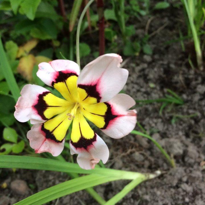 Pouvez vous donner l'identité de cette fleur?
