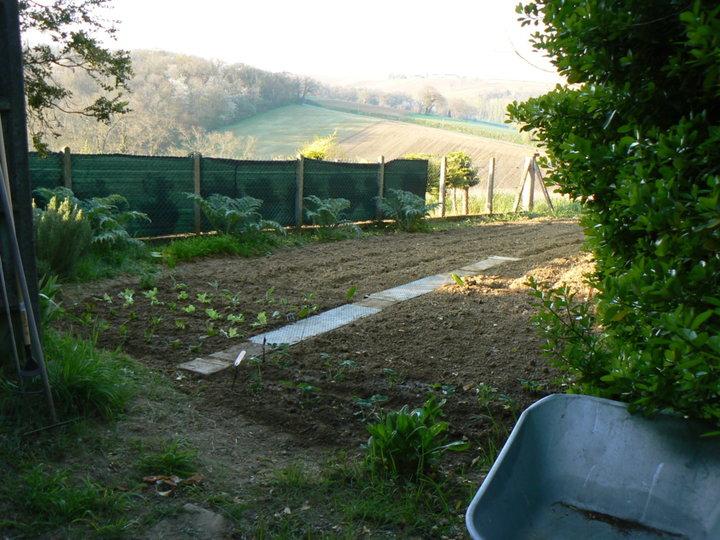 Premières plantations de légumes.
