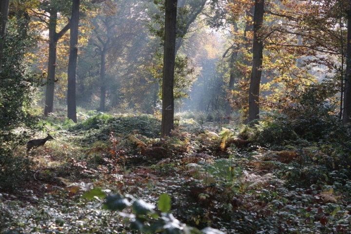 Promenade en forêt 2016
