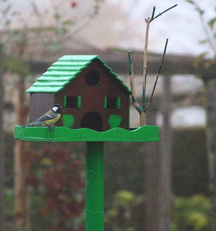 Repas des Mésange et autres oiseaux