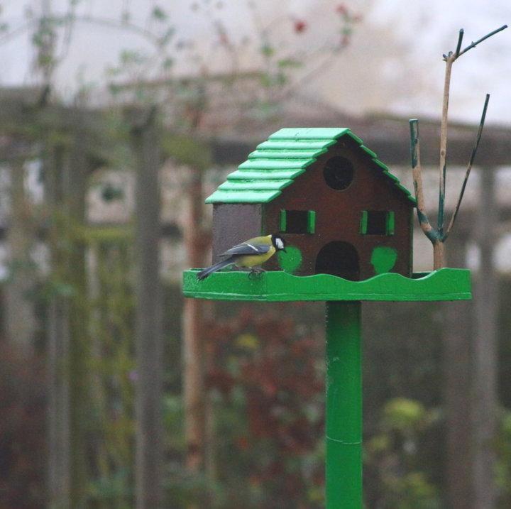Repas des mésanges et autres oiseaux