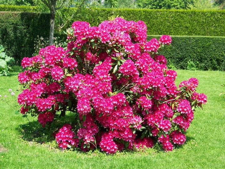 Fleurs Et Arbustes D Ornement Album Photos Mon Jardin