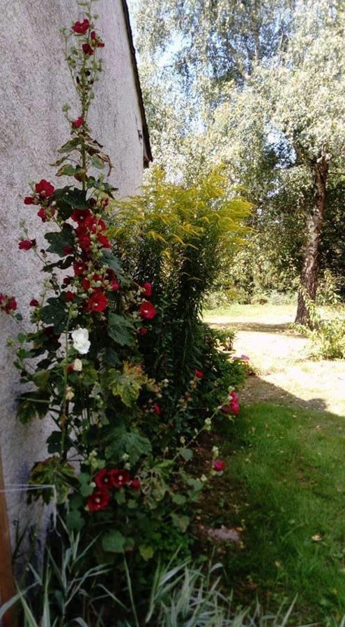 Roses tremières et verges d'or
