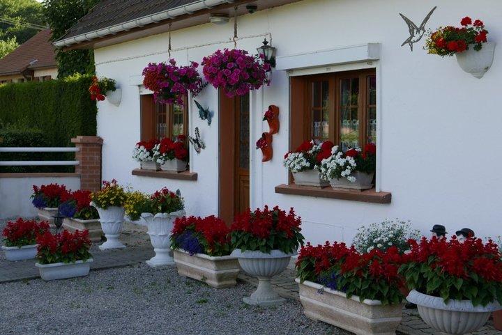 Sages, geraniums et pétunias
