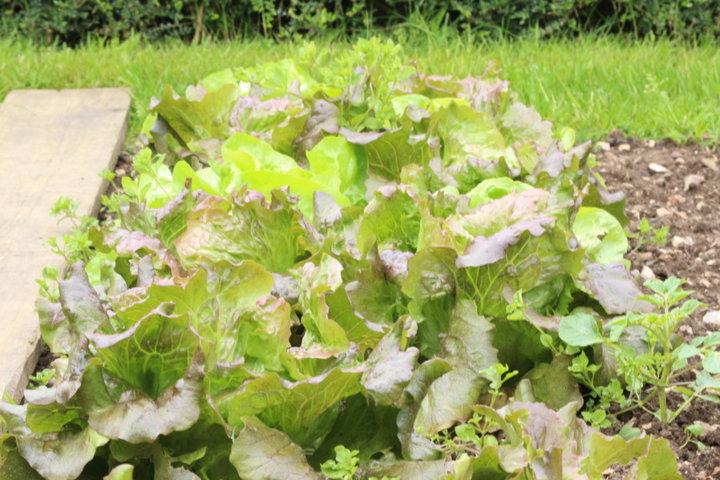 Salade appia