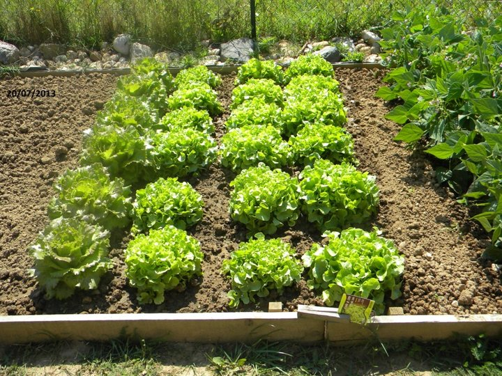 Salades 20/07/2013