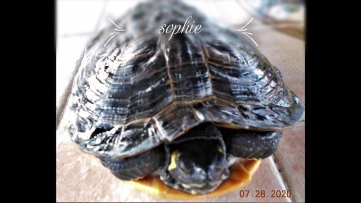 SOPHIE la tortue