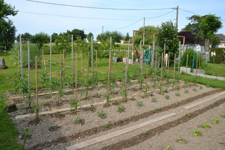 Tomates, haricots, choux de bruxelles, salades