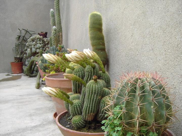 Un autre coin de ma terrasse
