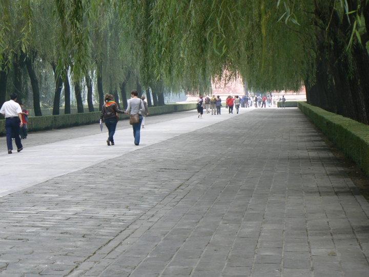 Un peu de verdure dans un parc (Pékin.