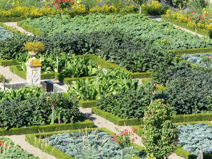 Une partie du jardin potager